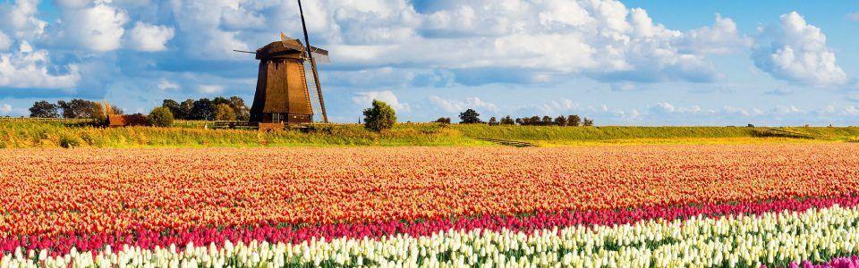 Парк Кекенхоф во время цветения тюльпанов